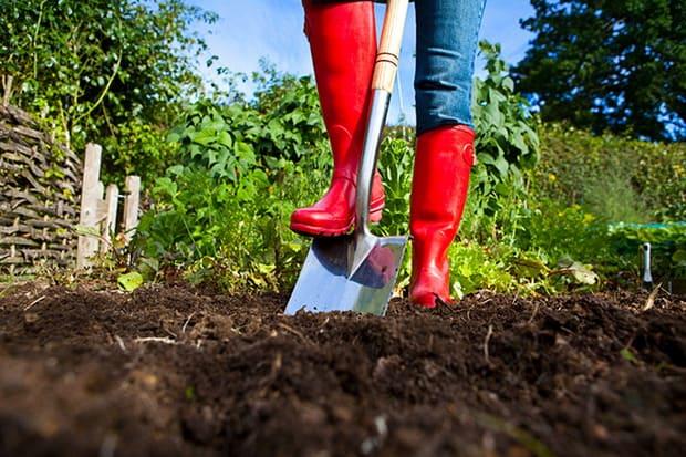 Tips om te tuinieren
