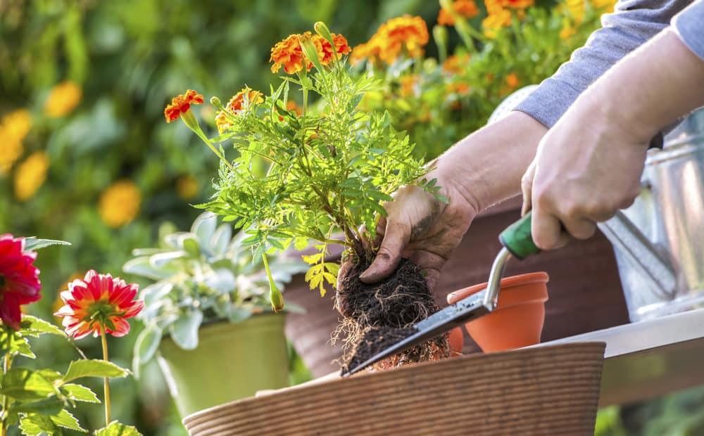Hoe maak je jouw tuin gereed voor de zomer?